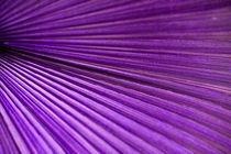 Palmenblatt in lila von Thomas Brandt