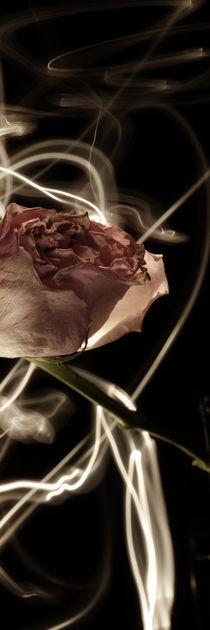 Rose in the dark von Max Nemo Mertens