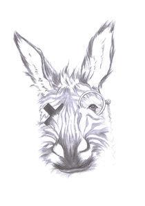 Donkey by Anna-Hoa Masche
