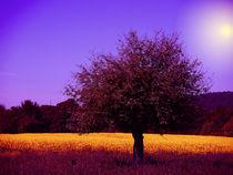 Baum im Rapsfeld von Thomas Brandt