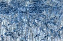 Weizenfeld negativ von Thomas Brandt