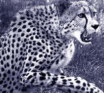 Gepard von Thomas Brandt