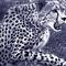 Gepard-sw-lila