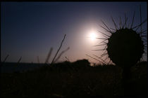 Sawaii (Night) Desert Cactus Carribean by David Hernández-Palmar
