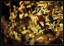 Der Sommer neigt sich dem Ende zu by Chris Rüfli Photography
