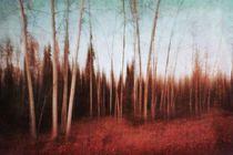 autumn forest by Priska  Wettstein