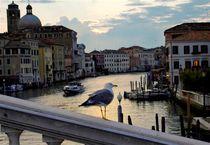 Venezia von Ivan Aleksic