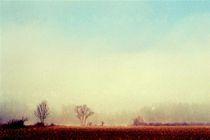 Fog by Ivan Aleksic