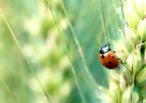 Ladybug von Maria Inden
