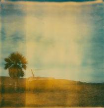 'desert palms' by Jennifer Evans