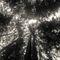 Muir-woods-stinson-beach-71