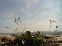 Über die Mauer by Elke Balzen