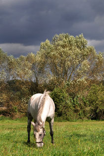 White Horse - Mark Brandenburg by captainsilva