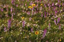 Blumenwiese in den Alpen von Wolfgang Dufner