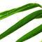 Bambus-img-5941
