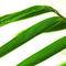 Bambus-img-5943