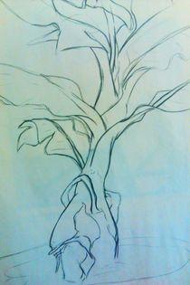 Charcoal-plant