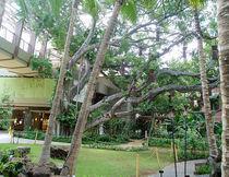 Zen Garden von Jimmy Pribble