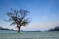 Tree and Moon at Dawn von Craig Joiner