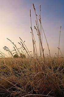 Winter's Morning in Wrington von Craig Joiner