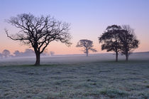 Trees at Dawn by Craig Joiner