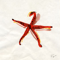 starfish by FILIPPO PARTESOTTI
