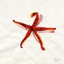 starfish von FILIPPO PARTESOTTI