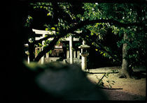 JAPAN - NIGHT GARDEN IN KYOTO by FILIPPO PARTESOTTI