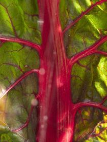 Flux végétal rouge by Roland  Vanoverberghe