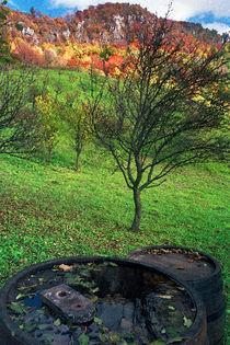 Autumn on Ravna Gora by Milivoj Kuhar