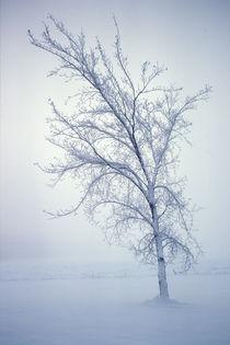 Winter Tree Bones 614 von Patrick O'Leary