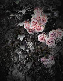 Rained Roses by Hana Bílková