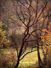 Autumn greetings von Hana Bílková