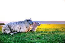 Schaf mit Lamm auf dem Deich von Thomas Schaefer