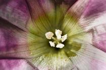 Purple Flower by Rick Sharf