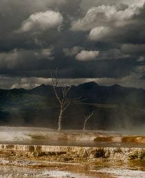Sulphur Tree von Rick Sharf