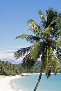 Big Corn Island Palm by John Mitchell
