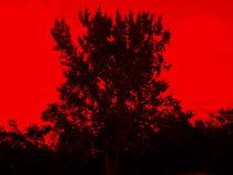 red by Gary Burkhardt