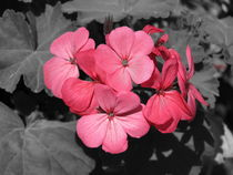 Black and pink by Firence Pe.N.