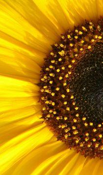Sonnenblume-links von theresa-digitalkunst
