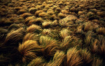 Windswept Grasslands by Shaina DeCiryan