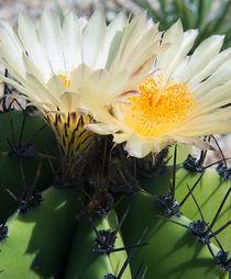 Cactus-flowers