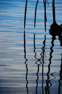 Serenity Among Mangroves von Carolyn Cochran