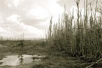 Desolation Everglades by Carolyn Cochran
