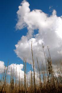 Big Sky Everglades by Carolyn Cochran