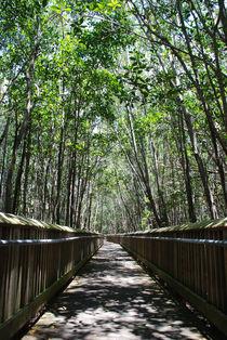 A Quiet Forest Path by Carolyn Cochran