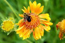 Bee Flower by Carolyn Cochran