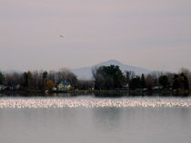 Geese and snow geese on Lake Champlain in Quebec von Angel Vallée