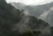 Misty Cloud Forest von John Mitchell