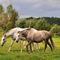 Dsc-0618-due-cavalli